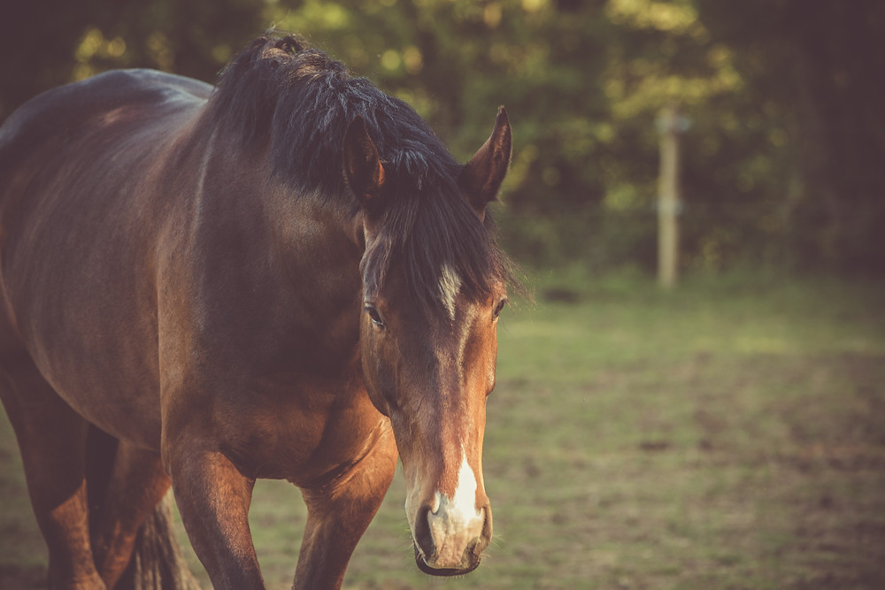 The way  horses are supposed to live: outside and in peace