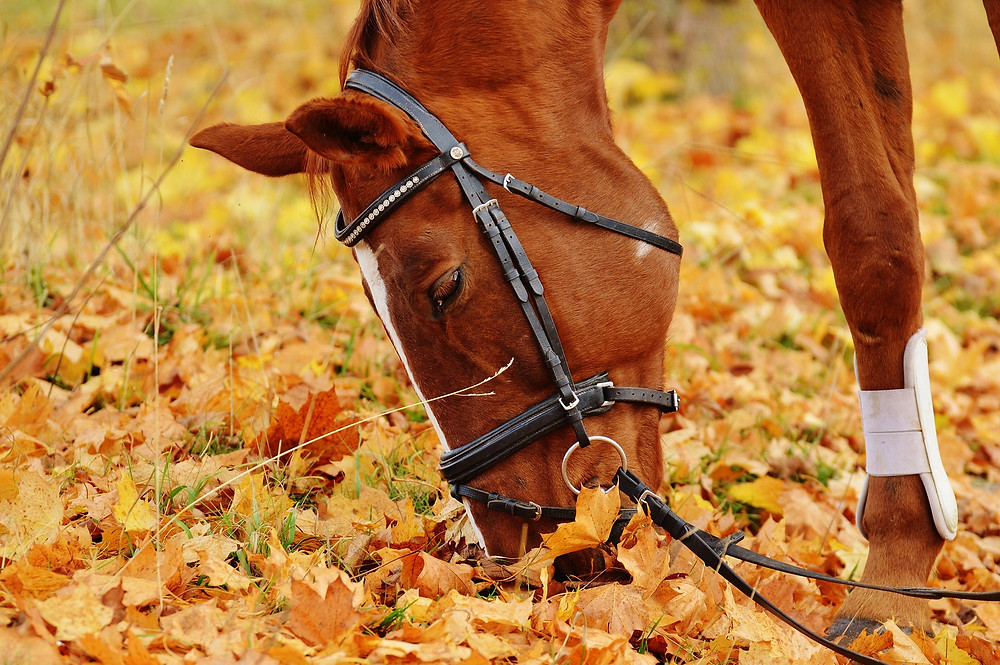 sweet horse grazing on fall leaves