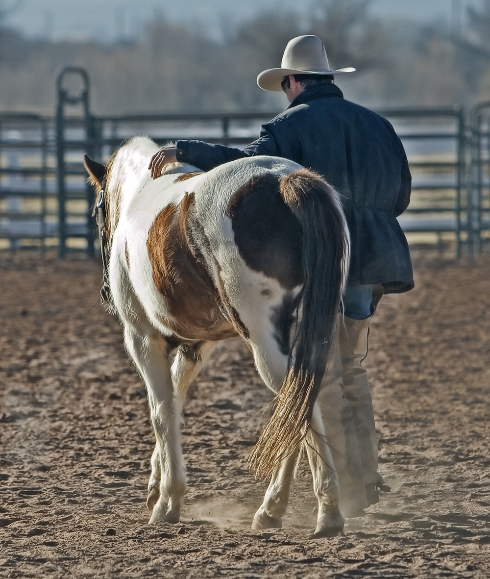 a man and his horse walk the line