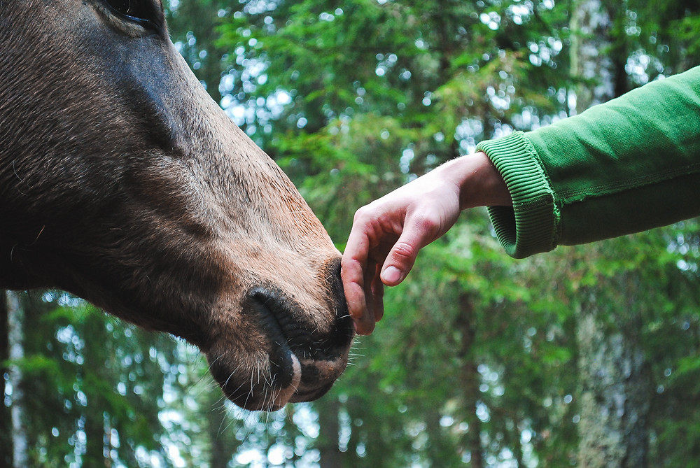 horse and human contact