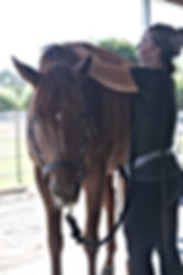 Assessing the body and frequency of this young TB mare