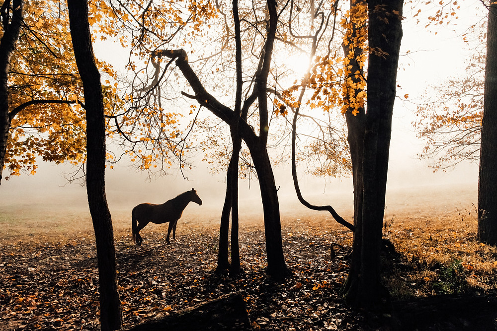 dew, dawn and a horse