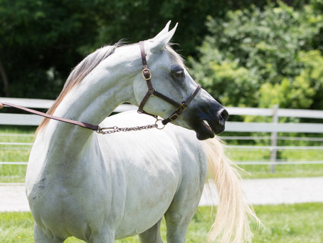 Let's Talk About Sustainability In The Endurance Horse