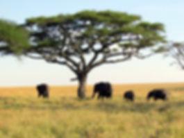 TANZANIA 2020 2 Low Res.jpg