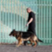 Dog Patrols.JPG