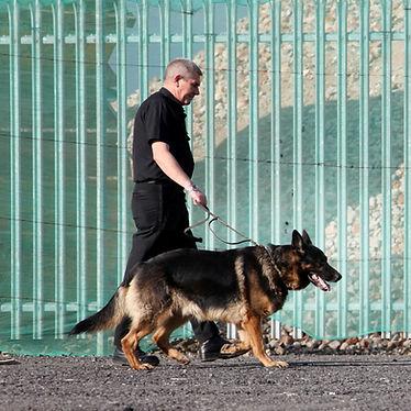 Dog%20Patrols_edited.jpg