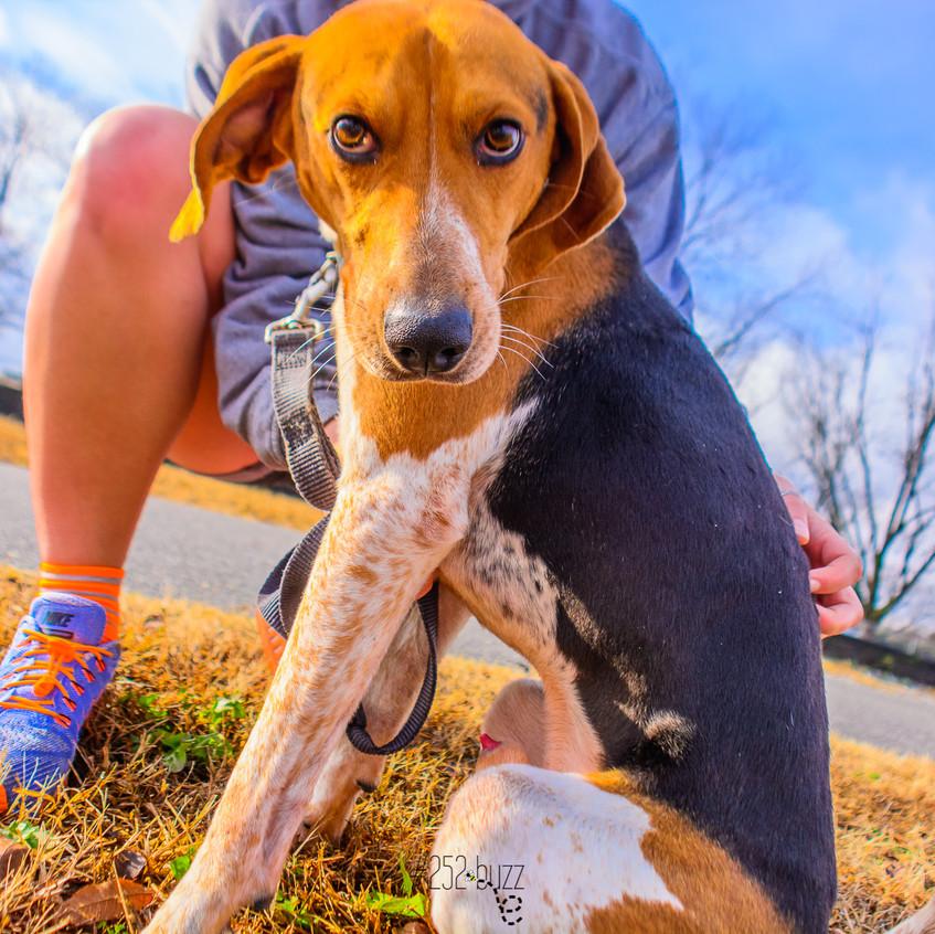 Dogs Pitt County Animal Shelter Dec 14-208