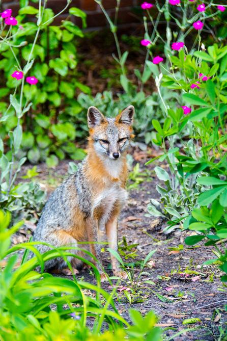 Tryon Palace Maude Moore Latham Memorial fox 5