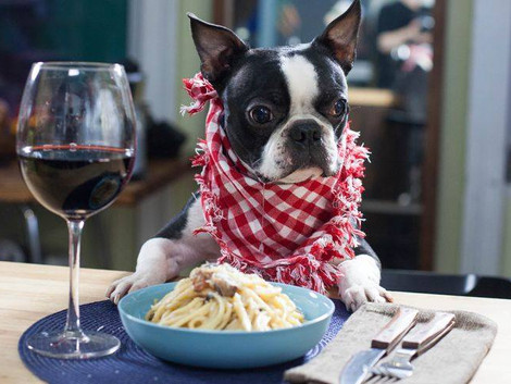 Spay-ghetti dinner on March 31 will benefit Spay Today