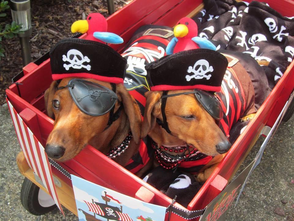 piratedogs