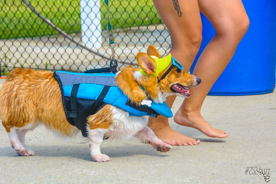 doggie pool party 3