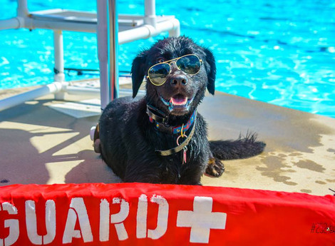Doggie Pool Party is Aug. 13