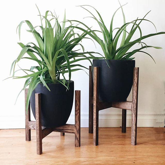 MAKE YOUR PLANTS GREAT AGAIN. Give them