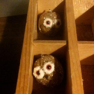 Walnut Owls