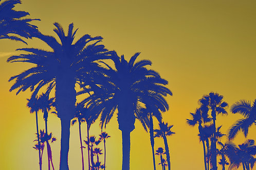 Lithograph Inspired Palms