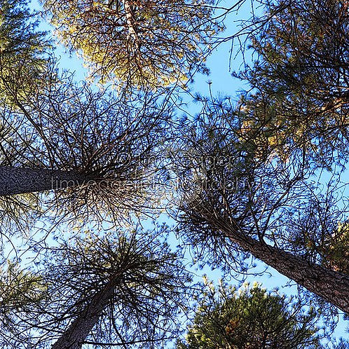 Canopy Upshot