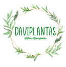 logo-daviplantas-png.png