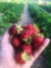 strawberriesmclean.jpg