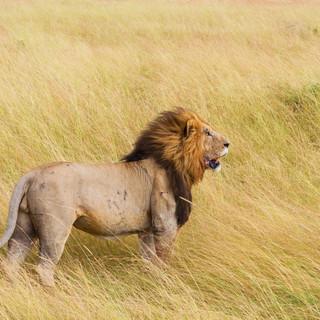 Tanzània, safari Sharubu