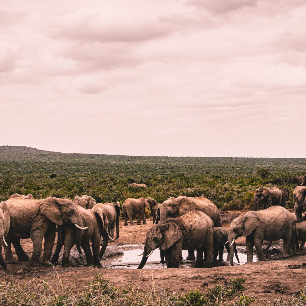 Sud-àfrica i Moçambic