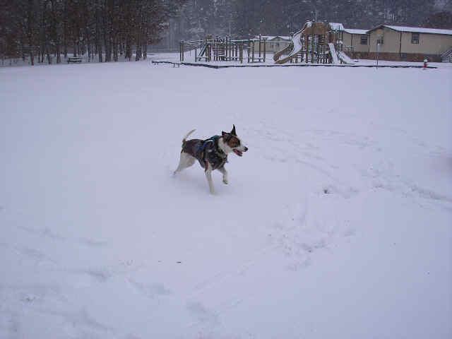 benny snow