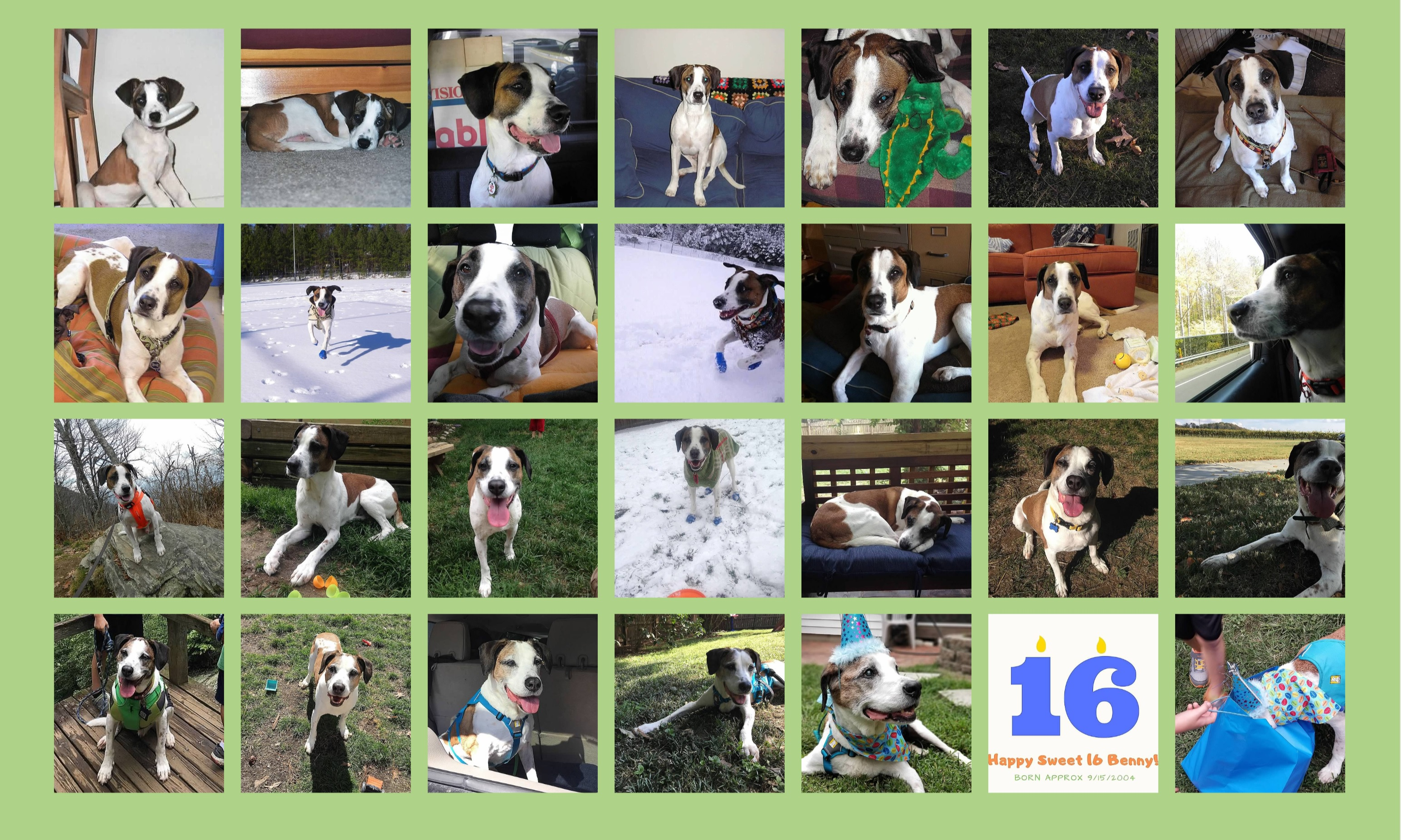 Benny 16 collage