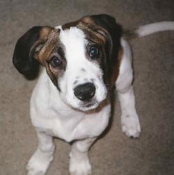 Benny 2004