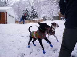 benny and vixen snow