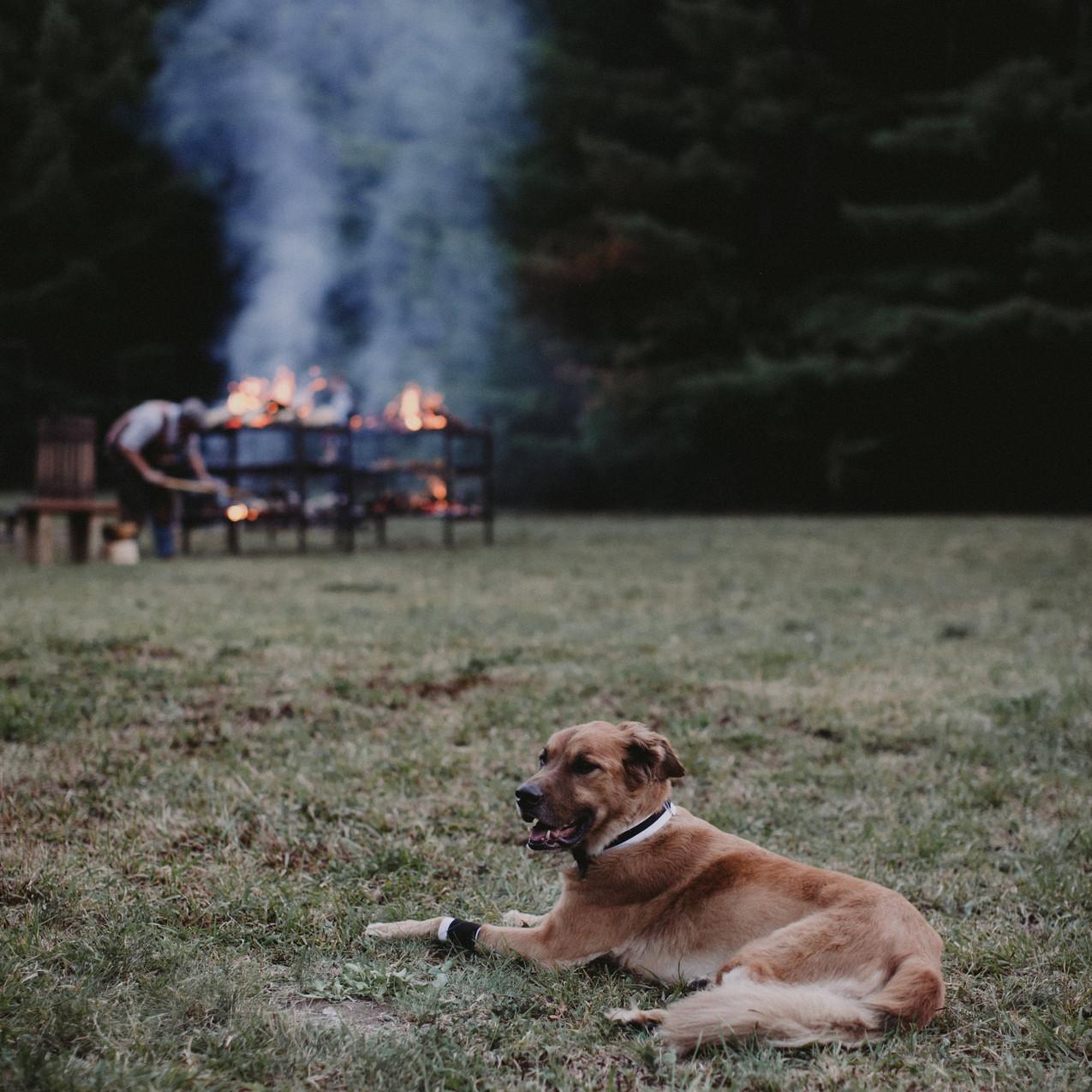 dogs of weddings