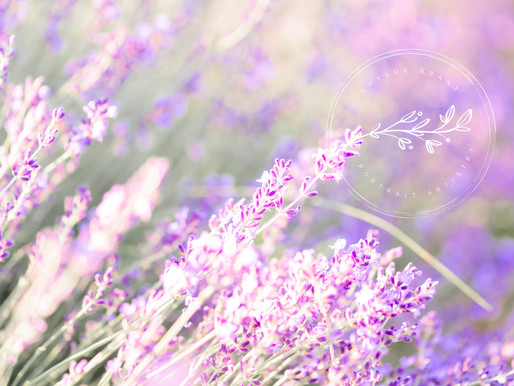 All The Lavender...