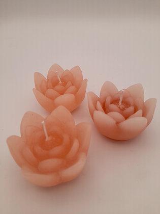 Lot de 3 Lotus