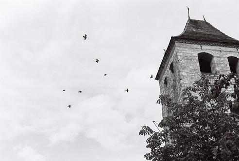 Birds and clocktower