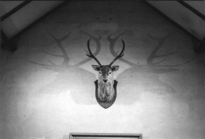 Stag head mounted on wall