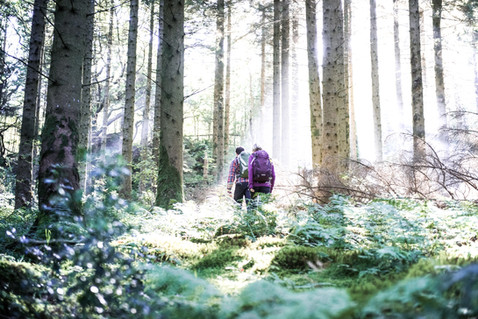Two walkers walk through a forest