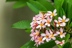 aloha-byron-bay-garden