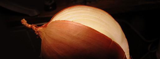 בצל כצמח מאכל ומרפא