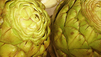 ארטישוק כצמח מאכל ומרפא