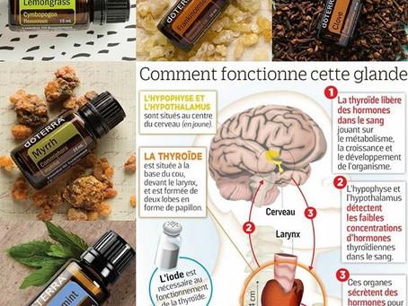 L'hypothyroïdie et hyperthyroïdie : les alternatives santé avec les huiles essentielles.
