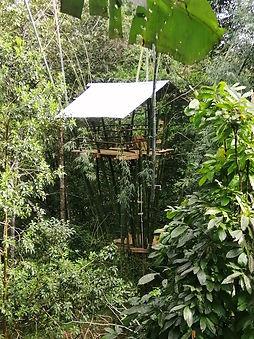 Bambu Treehouse.jpg