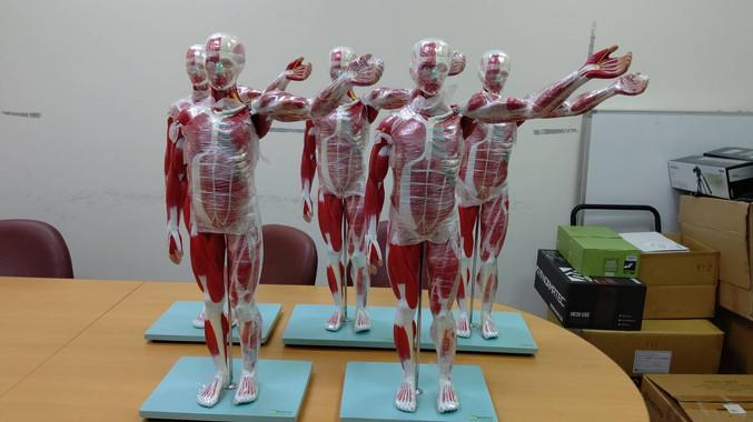 人體肌肉模具.jpg