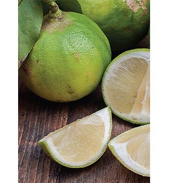 Bergamot Supreme Organic