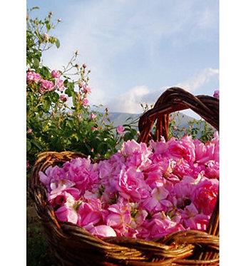 Damask Rose Bulgarian