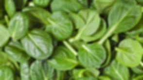 spinach-fun-facts1.jpg