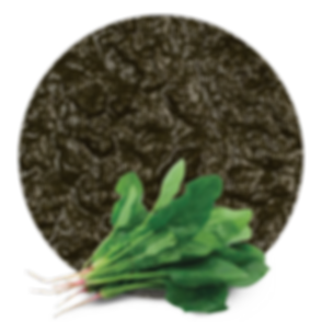 SPINACH-PUREE_edited.png