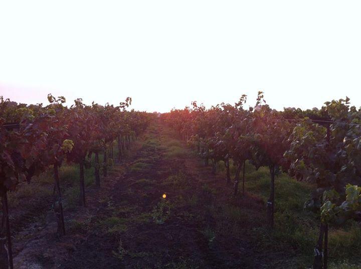Morning Pick in Lodi