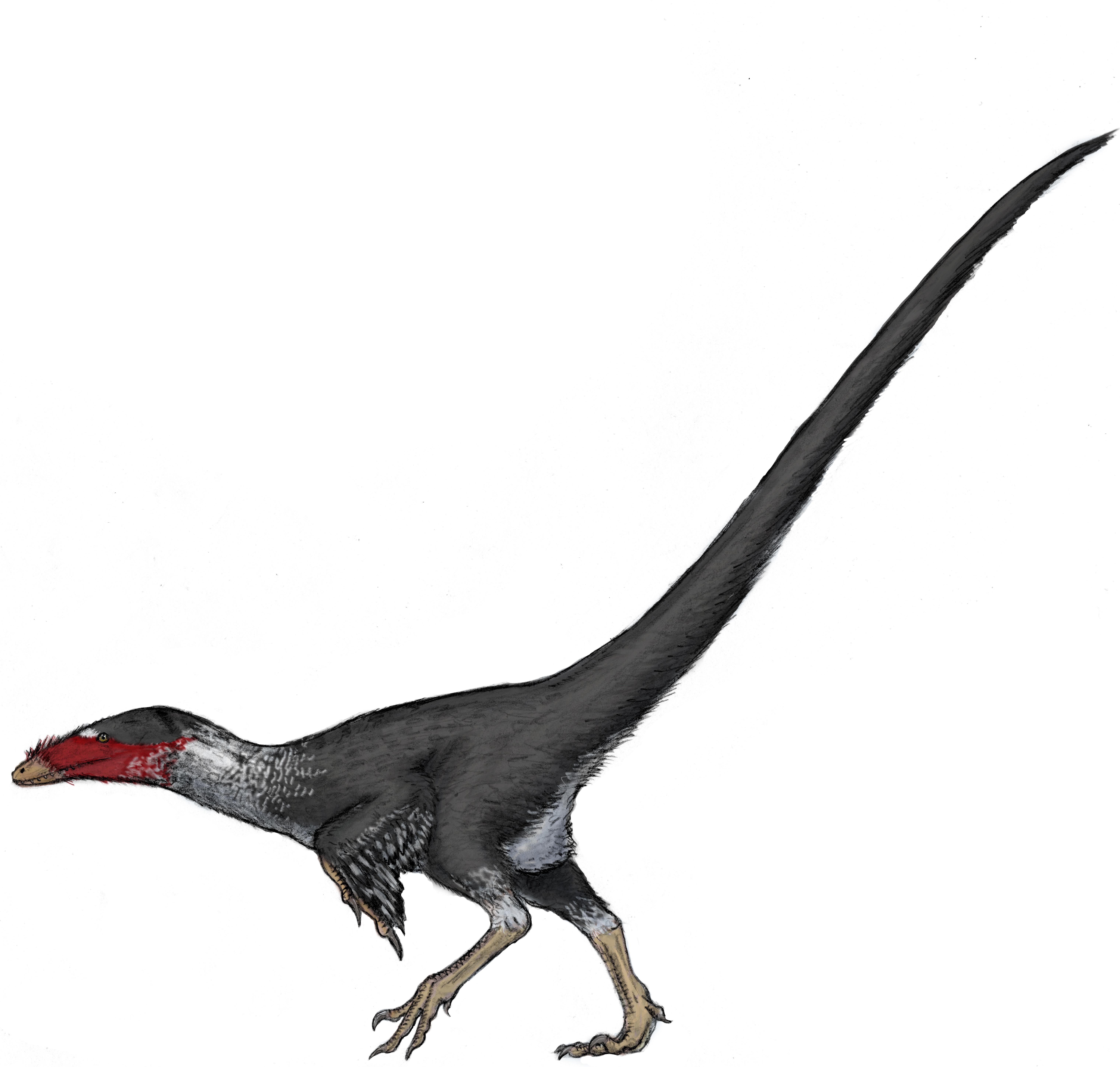 Asher Elbein alabama_dromaeosaurid-1 copy