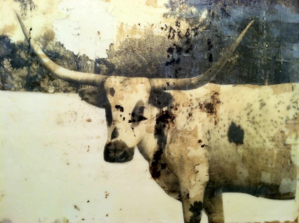 Encaustic of a bull