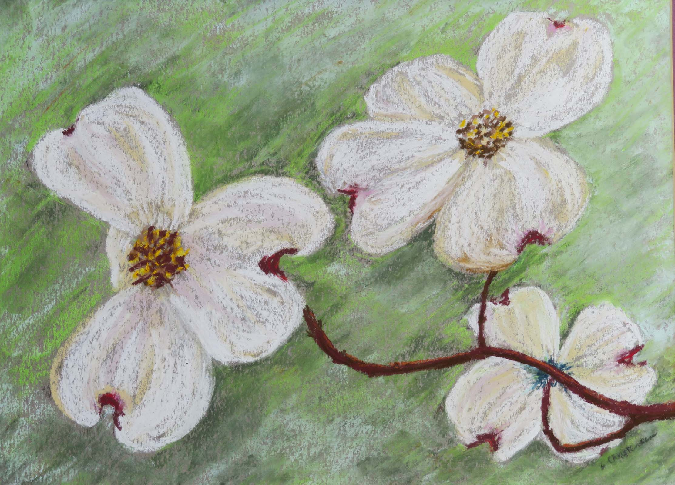 A Whiter Shade of Pale, Dogwood by   Libby J Christensen nfs