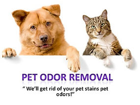 Pet odor removal from area rugs