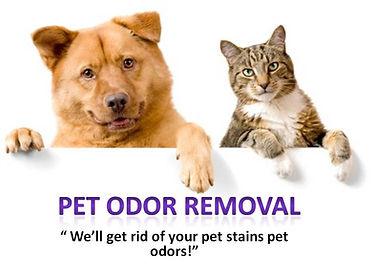 Pet stains removal from area rugs